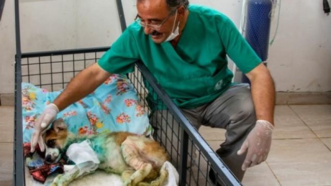 Yaralı Hayvan  İhbar Sayısı Artıyor