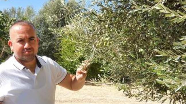 Mut Zeytin Hali ve Pazarı Açılıyor