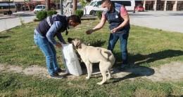 Mut Belediyesi Sokak Hayvanlarını Unutmadı